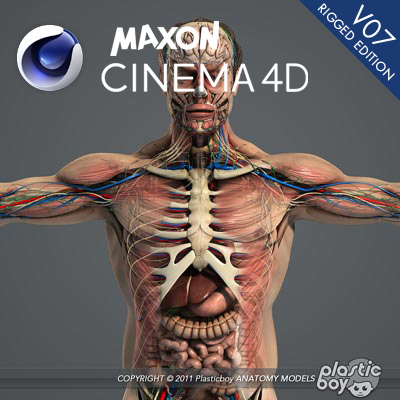 C4d Rigged Male Anatomy Complete 3d Model Pack V06 Fully Textured