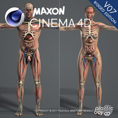 anatomiya-seksa-video-onlayn